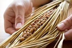 発酵食品の代表、日本のスーパーフード、納豆