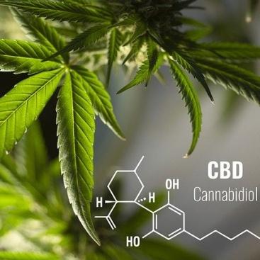 大麻の歴史